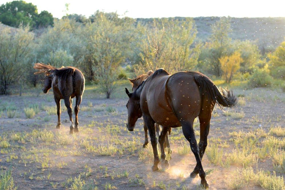 Olathe-Colorado-Hay-Farm-32.jpg