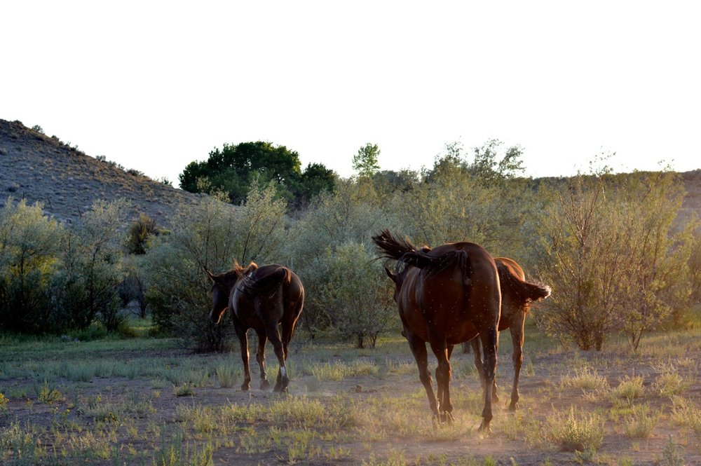 Olathe-Colorado-Hay-Farm-33.jpg