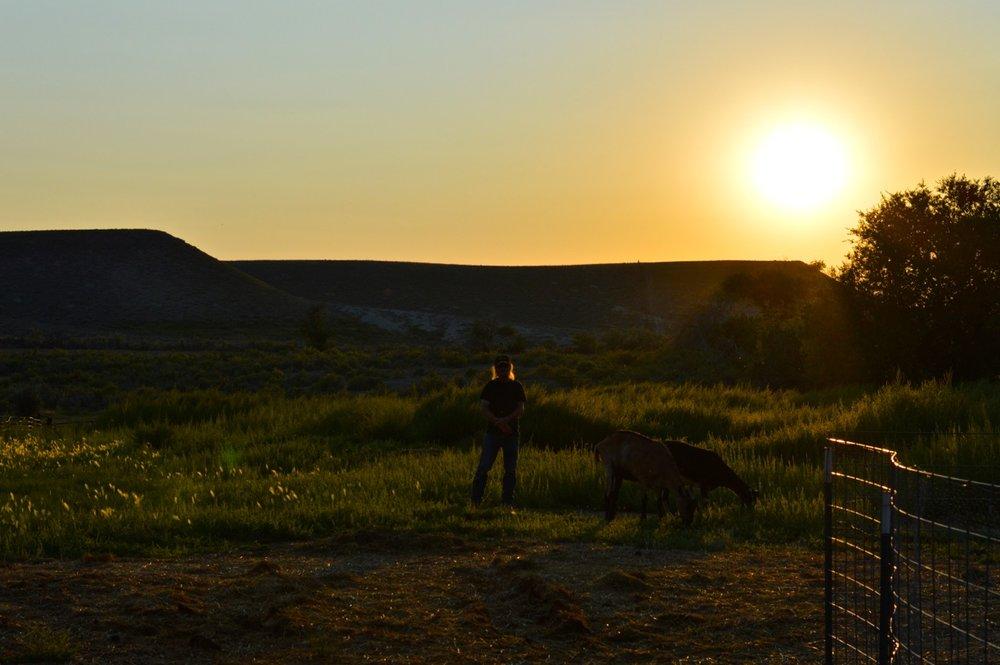 Olathe-Colorado-Hay-Farm-38.jpg