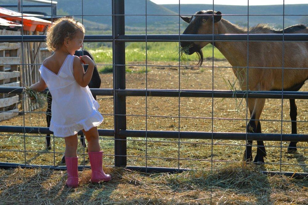Olathe-Colorado-Hay-Farm1.jpg