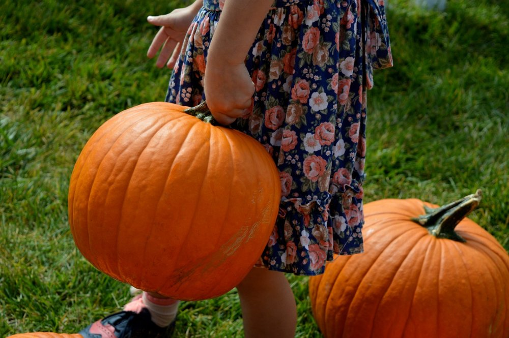 Church-Pumpkin-Patch-Aurora-Colorado-3.jpg