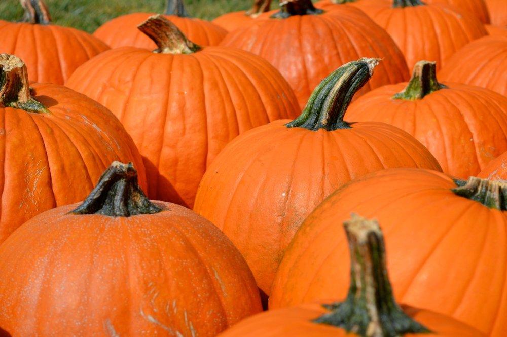 Church-Pumpkin-Patch-Aurora-Colorado-11.jpg
