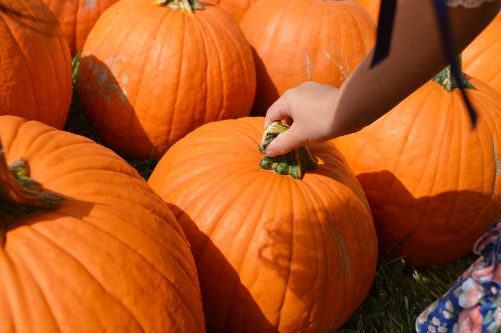 Church-Pumpkin-Patch-Aurora-Colorado-12.jpg