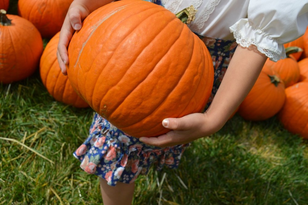 Church-Pumpkin-Patch-Aurora-Colorado-15.jpg