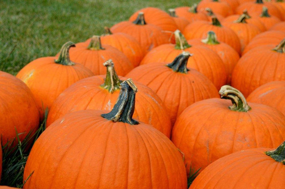 Church-Pumpkin-Patch-Aurora-Colorado-21.jpg