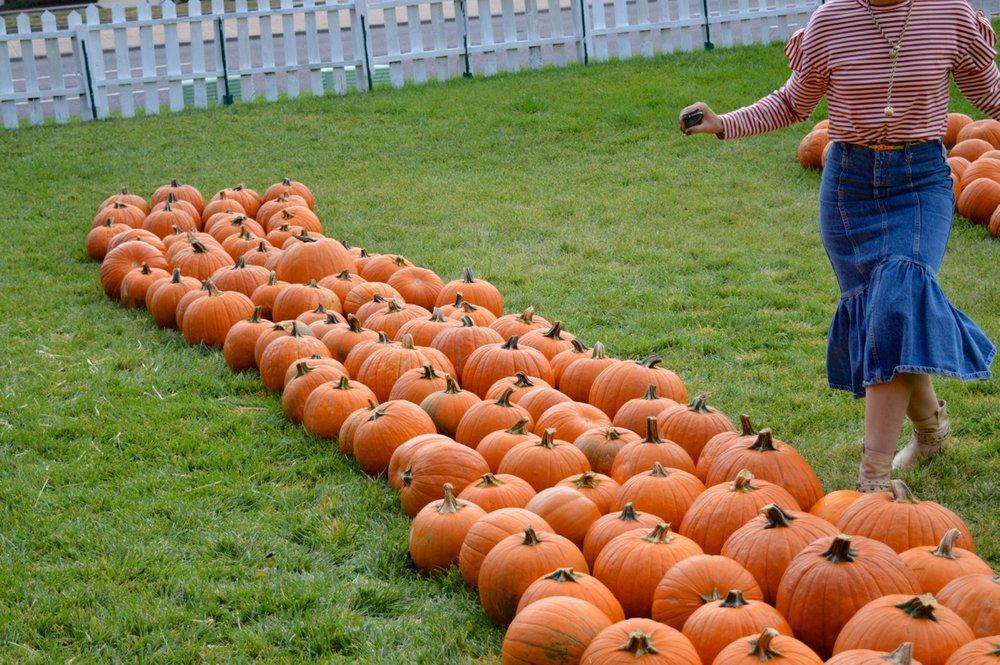 Church-Pumpkin-Patch-Aurora-Colorado-40.jpg