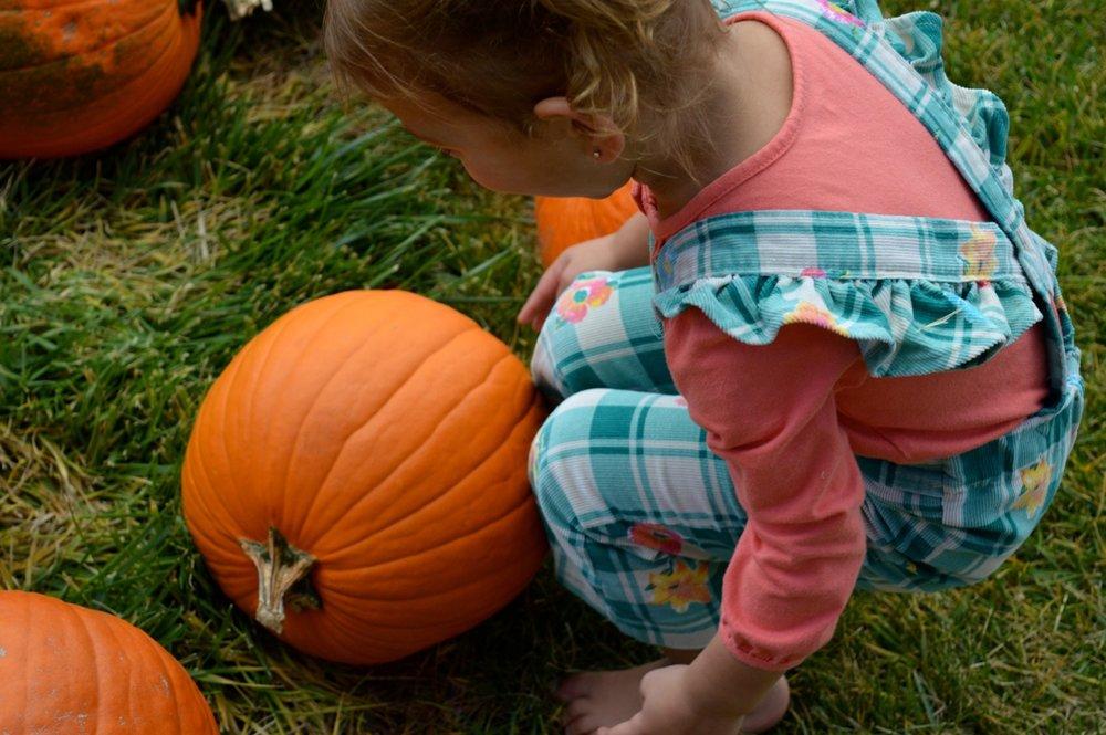 Church-Pumpkin-Patch-Aurora-Colorado-43.jpg
