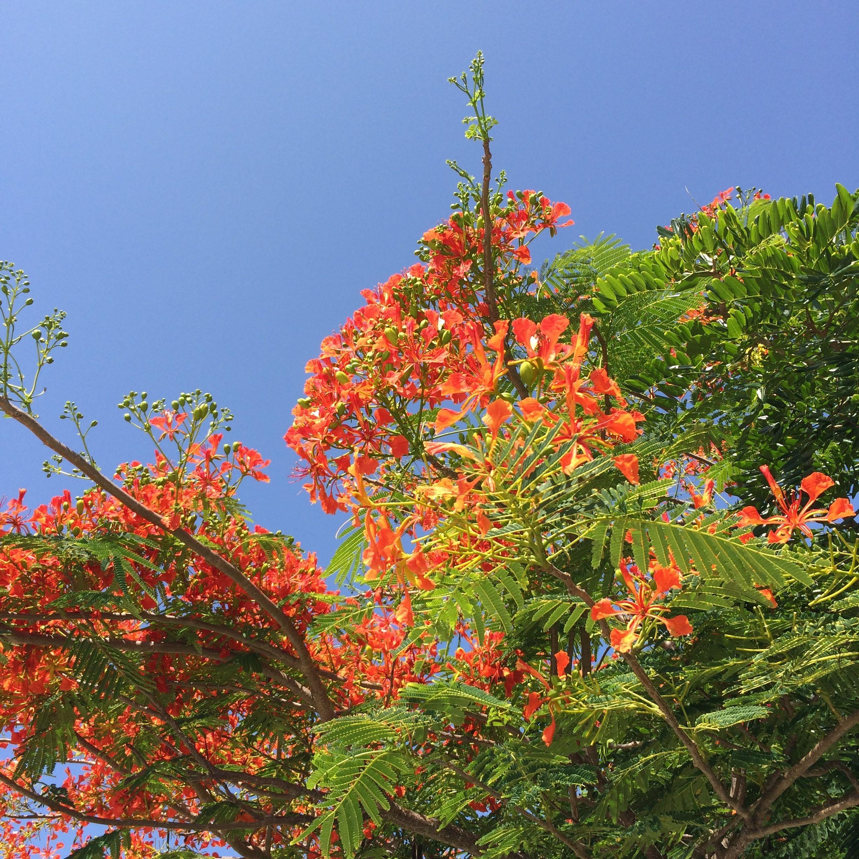 bm orange tree