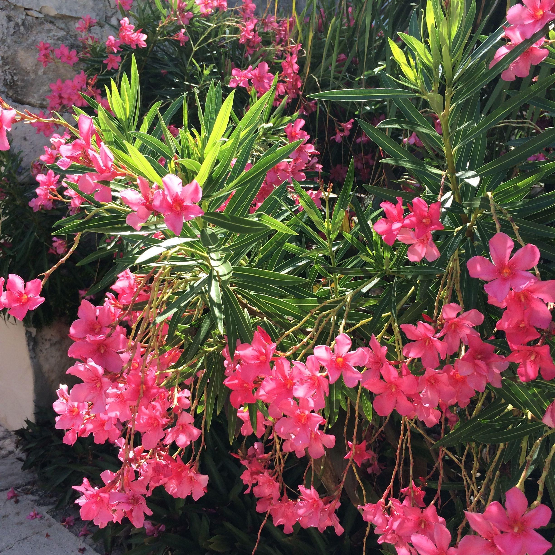 bm pink flowers