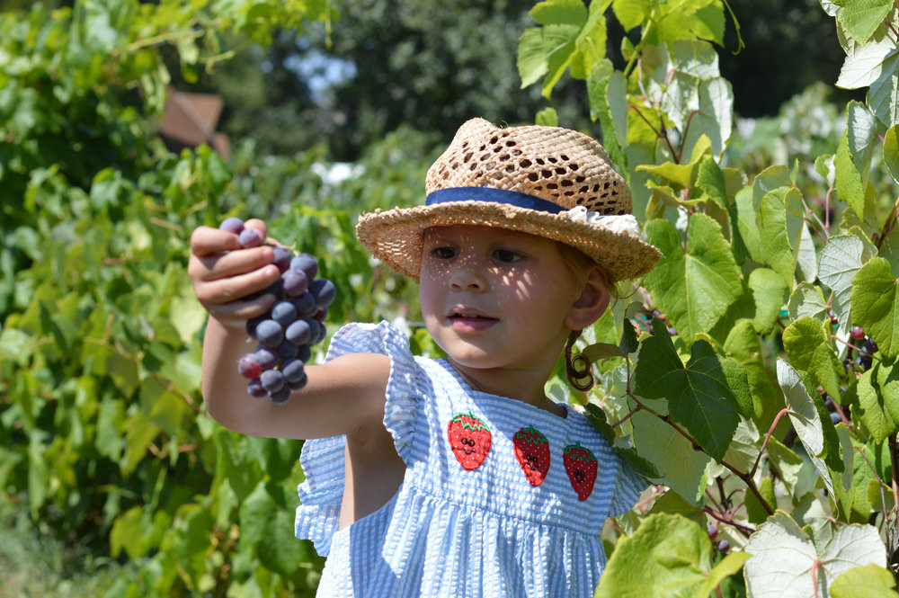 Fruit Picking Paonia.jpg