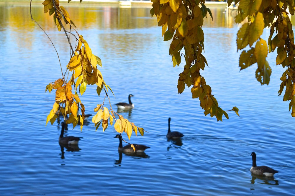 City Park Denver in Fall 2.2.jpg