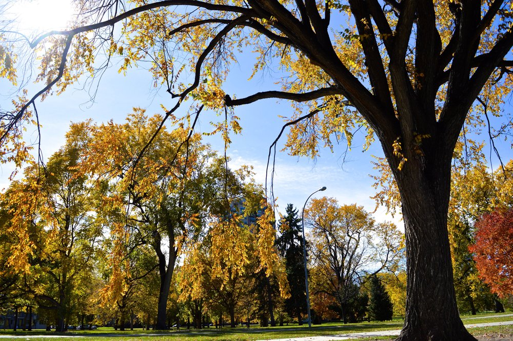City Park Denver in Fall 4.4.jpg