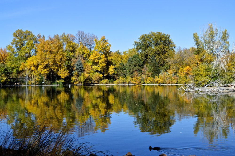 City Park Denver in Fall 9.9.jpg