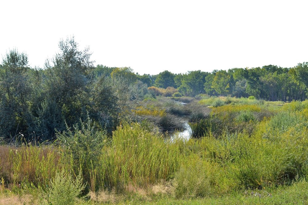 Gunnison River 4.jpg