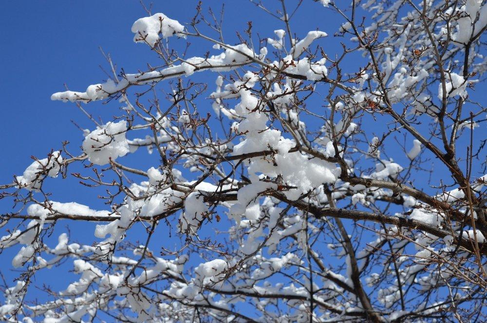March snow 18.jpg