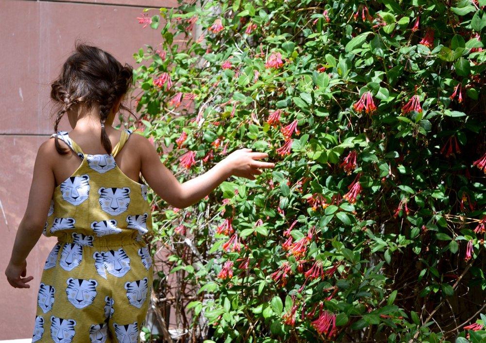 Denver Botanic Gardens 4.jpg