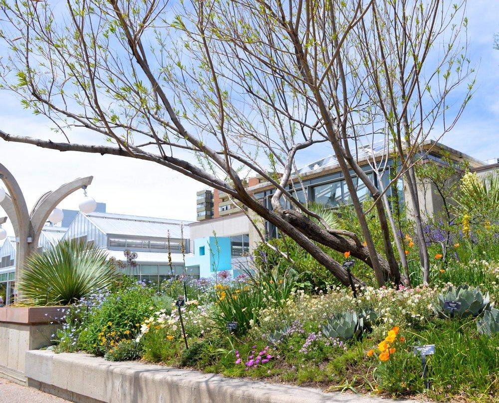 Denver Botanic Gardens 7.jpg