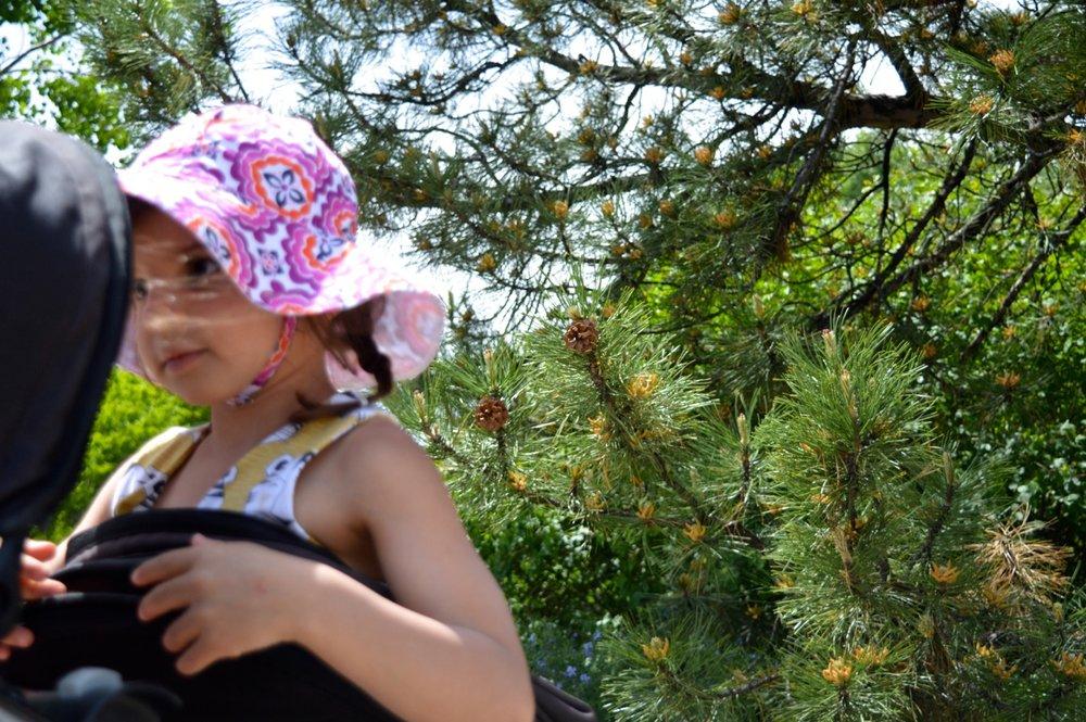 Denver Botanic Gardens 9.jpg
