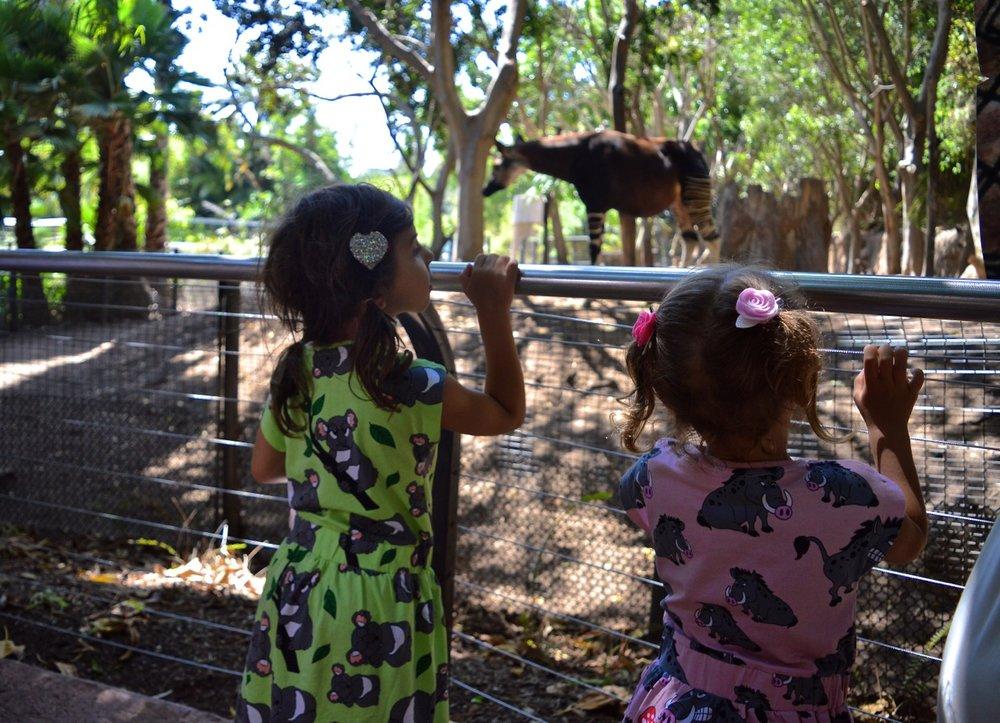 San Diego Zoo July 2018 16.jpg