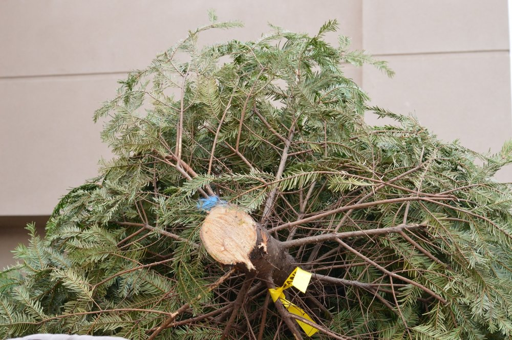 Christmas Tree Picking 2018 7.jpg