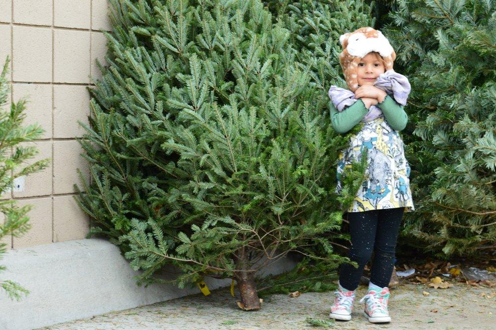 Christmas Tree Picking 2018 10.jpg