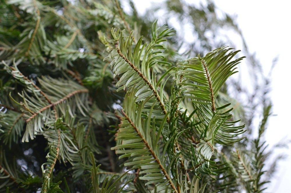 Christmas Tree Picking 2018 12.jpg