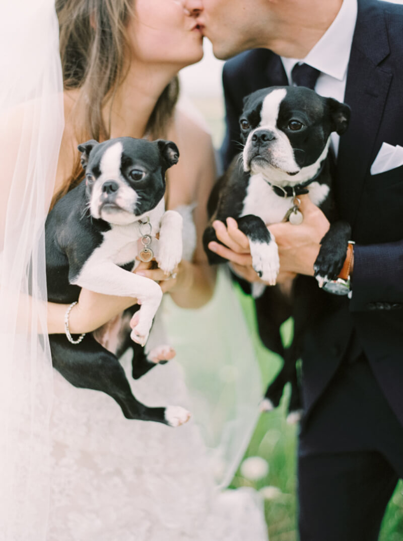 dogs-in-weddings-the-carolinas-magazine-3.jpg