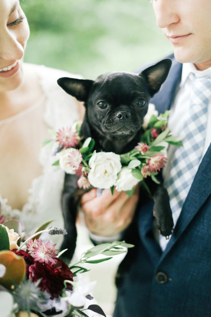 dogs-in-weddings-the-carolinas-magazine-4.jpg