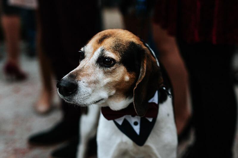 downtown-charleston-wedding-photos-19.jpg