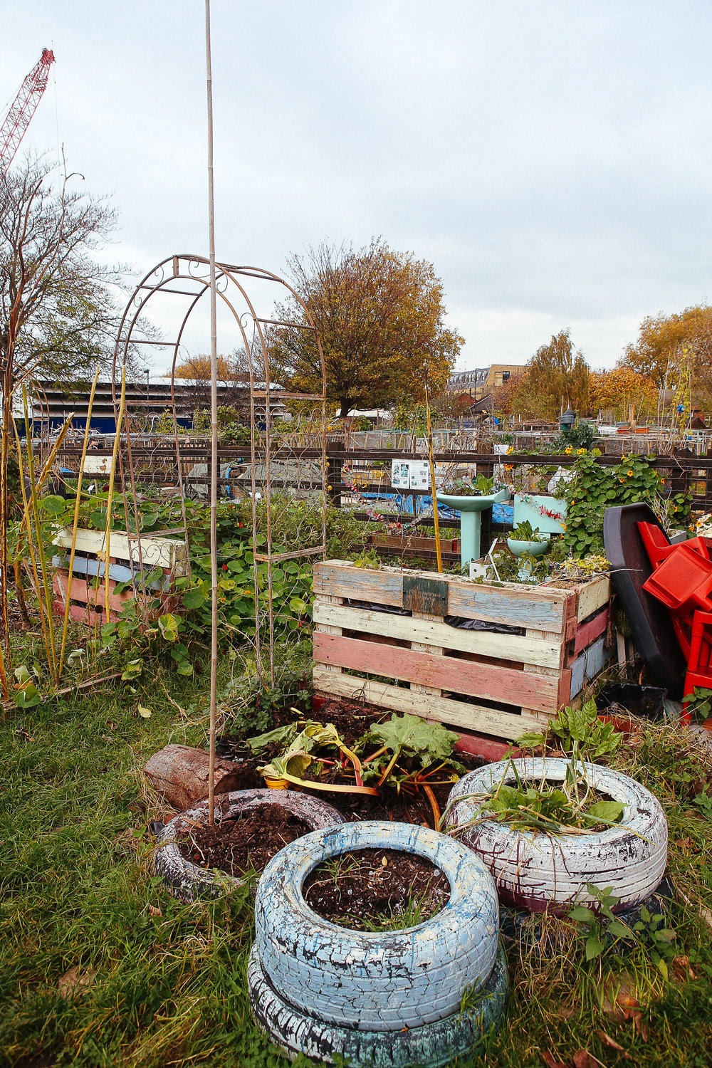 Stepney-City-Farm-Dalston's