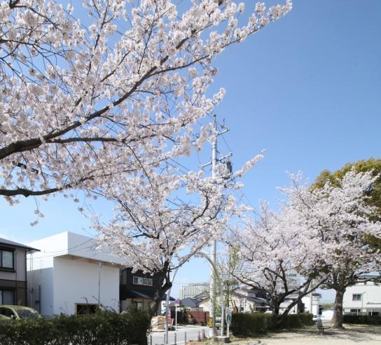 archaic_10_house-in-hanekita-katsutoshi-sasaki-associates__mg_1562-1000x907