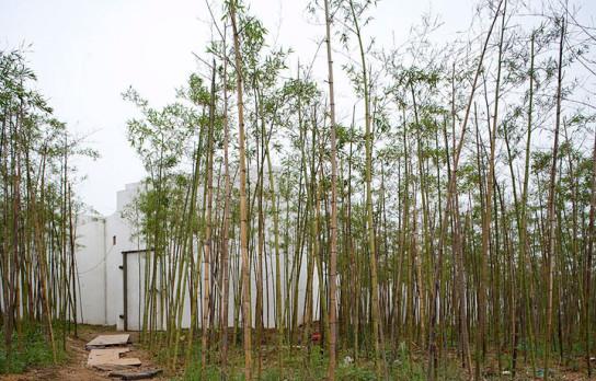 Jinhua-4574