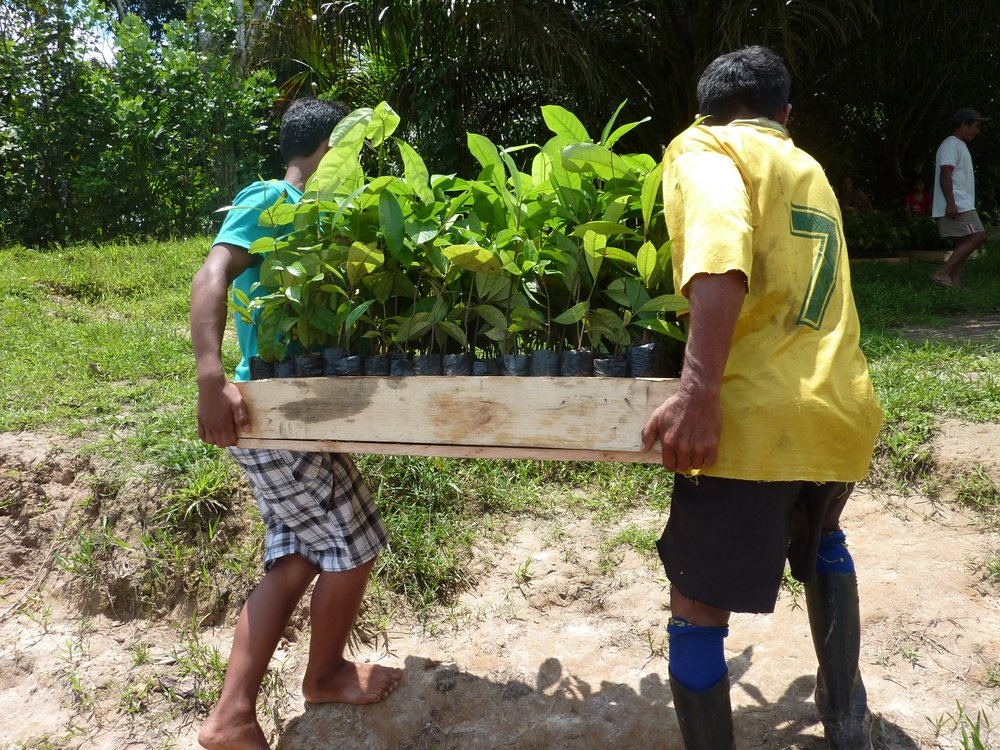 Community reforestation, linking the economic and ecological benefits of trees directly to the people -