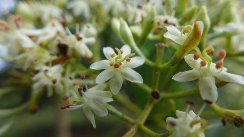 Blog — Camino Verde