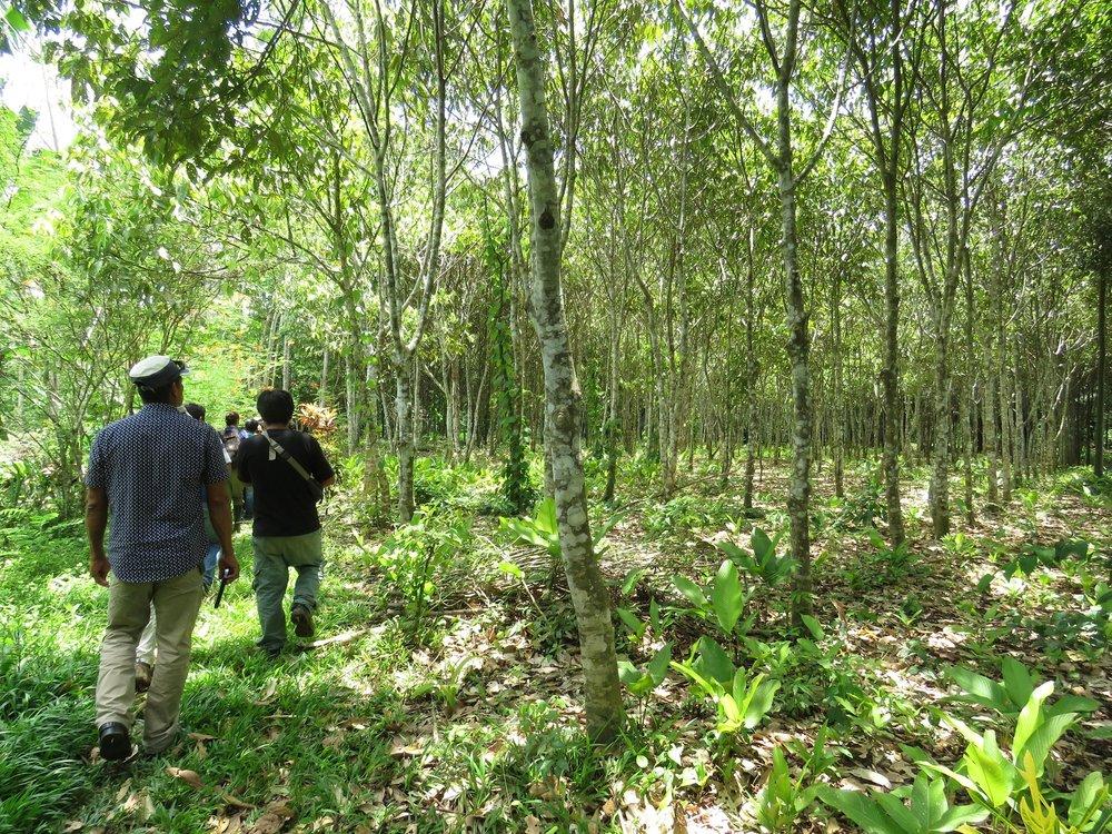 Amazonian Regeneration Program