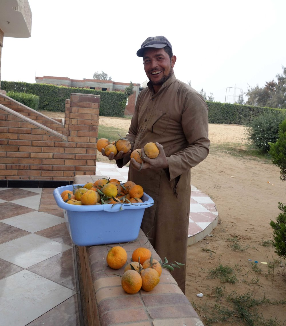 Merimde Beni Salama. Our daily ration of giant tangerines (photo: Giulio Lucarini)