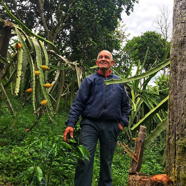 Day 3 in Colombia: We had the privilege to spend the day with coffee grower Abel Aya today in La Argentina, Huila. Here he is proudly standing amongst his new Geisha plants, nestled amidst his dragon fruit trees. Abel also produces natural organic additives which nourish his and other local producers' coffee farms. #directtradecoffee #bluebarncoffee #613coffee #organiccoffee #canadiancooperativeassociation #ourbarnisblue #limitonedragonfruitbeforelongwindycarride #dontshootthefruit