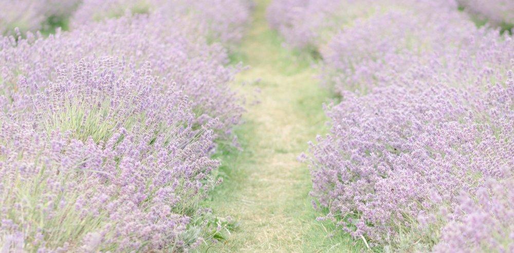 clairegraham_lavendersage-91.jpg