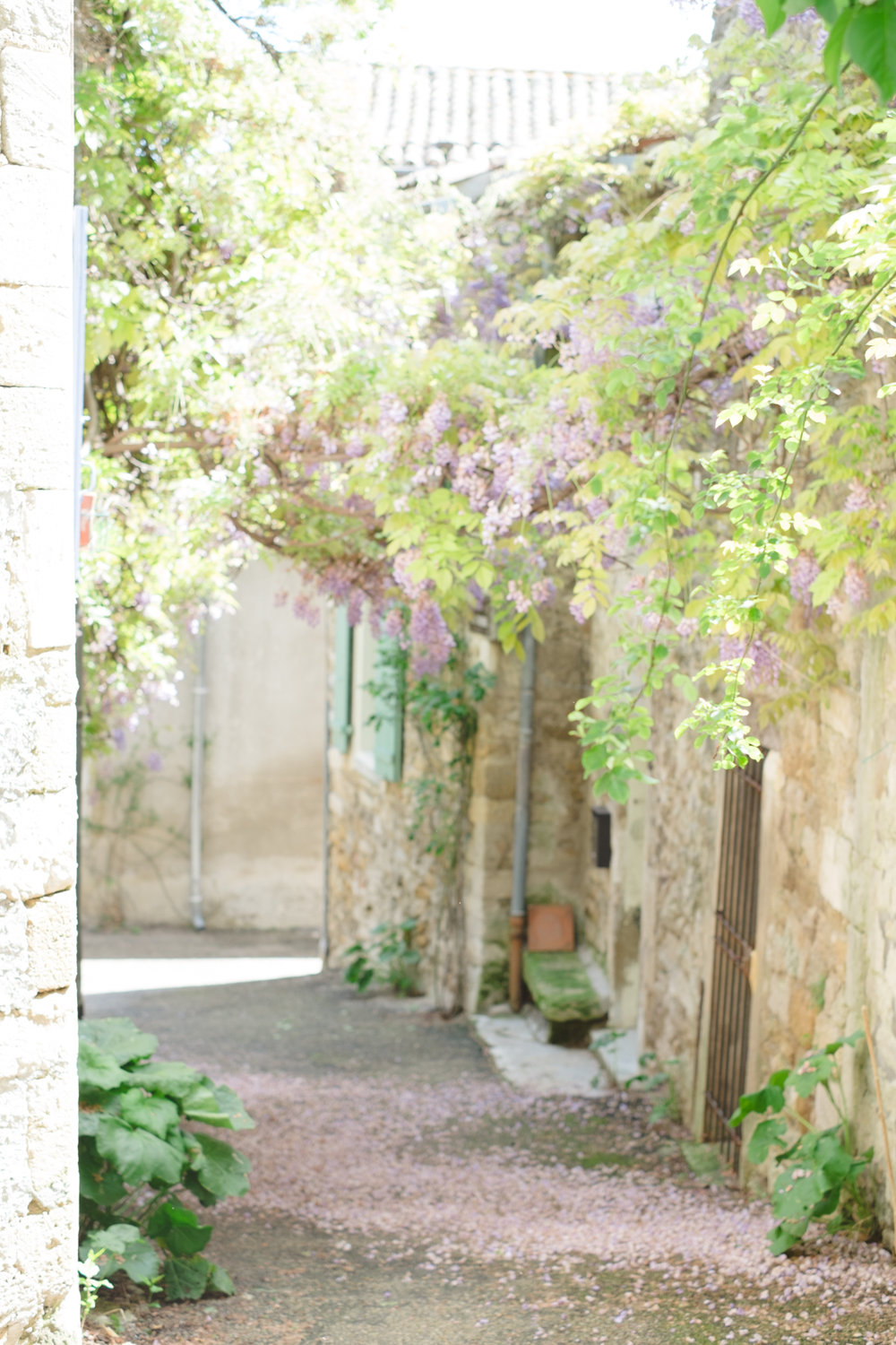 Claire Graham Photography_Provence-123.jpg
