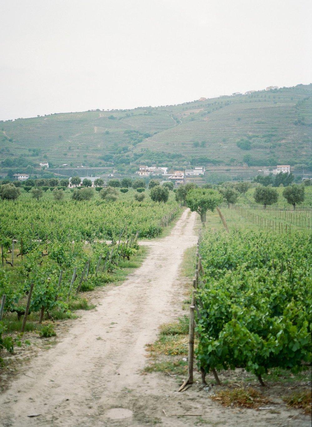 coco-lane-Portugal_0064.jpg