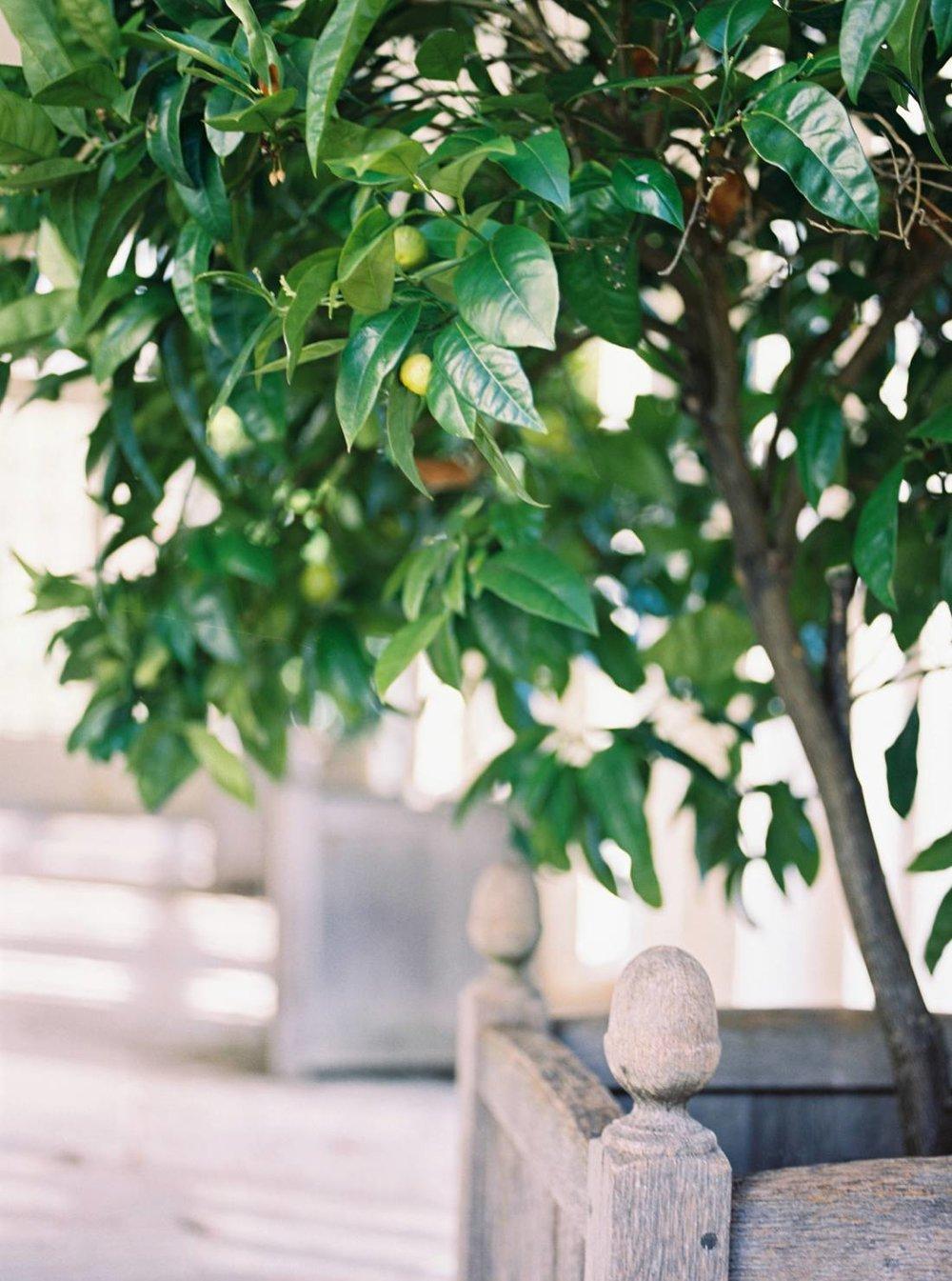 coco-lane-irena-k-orangery-maternity_0046.jpg