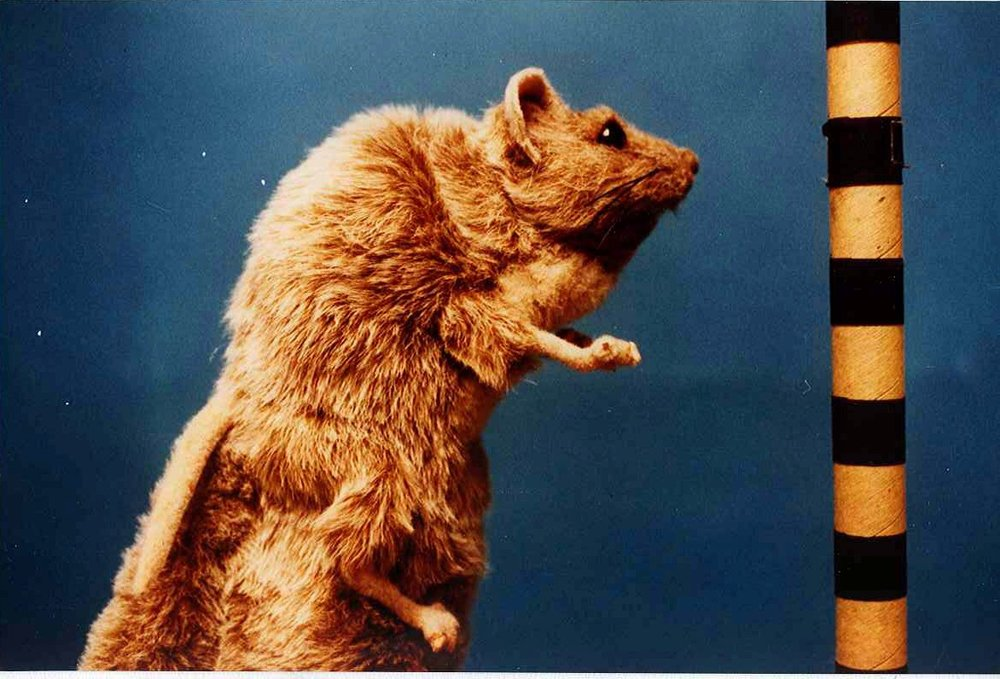 kangaroo rat puppet.jpg