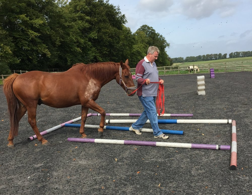 'Leading and Being Led' with Bill, Scotland Lodge Farm, UK