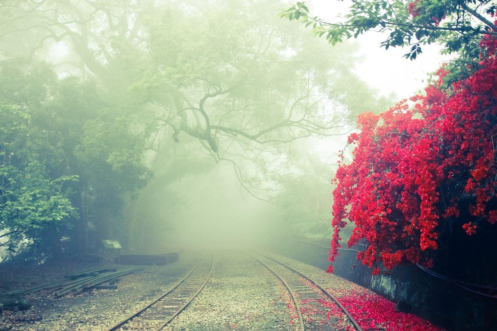 photo chemin arbre rouge.jpg