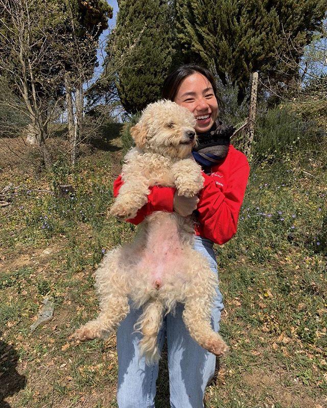 Truffle-hunting dogs   Direwolves. Swipe for cuteness!!!!! 😭