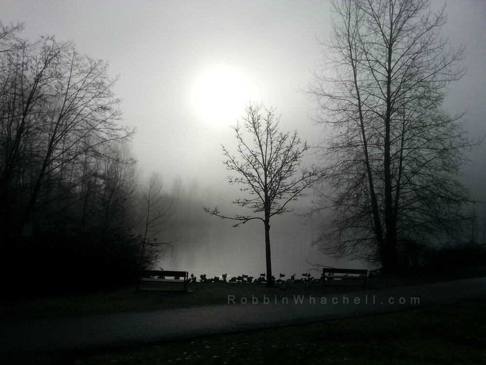 Morning-Mist-2-copyright