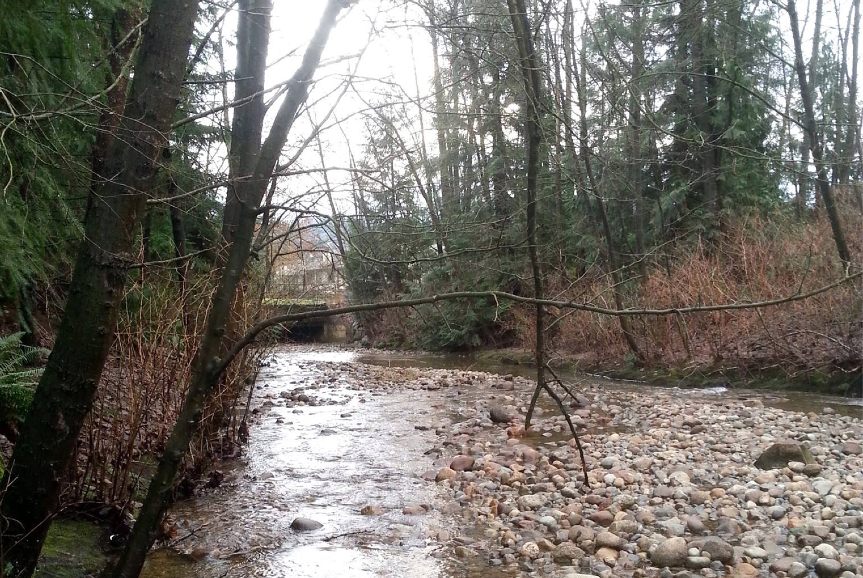 Photo of Scott Creek looking south toward Guildford Way in Coquitlam  (Photo: Robbin Whachell)