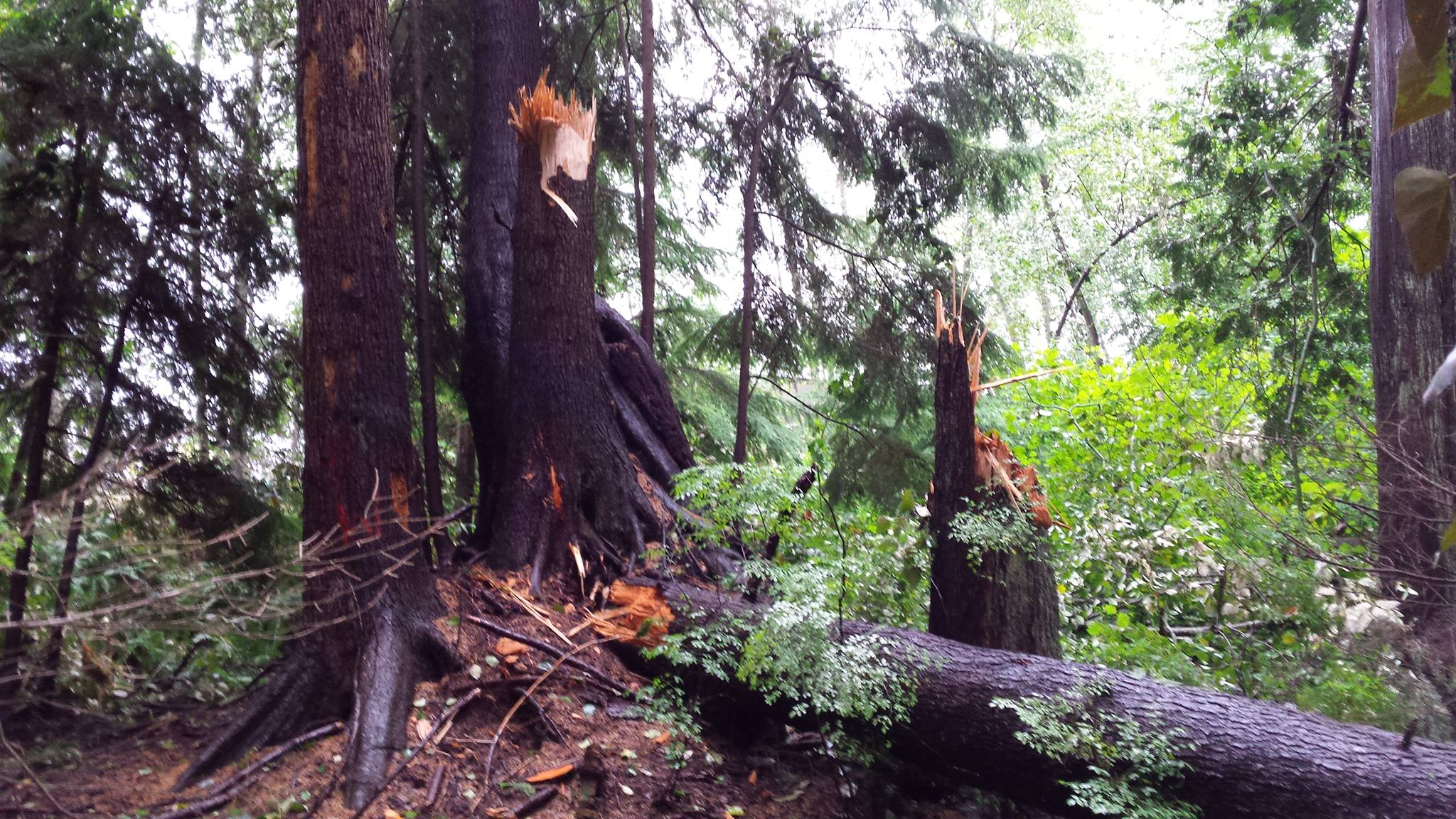 I took this photo 4 days after the storm... trees just snapped like match sticks.