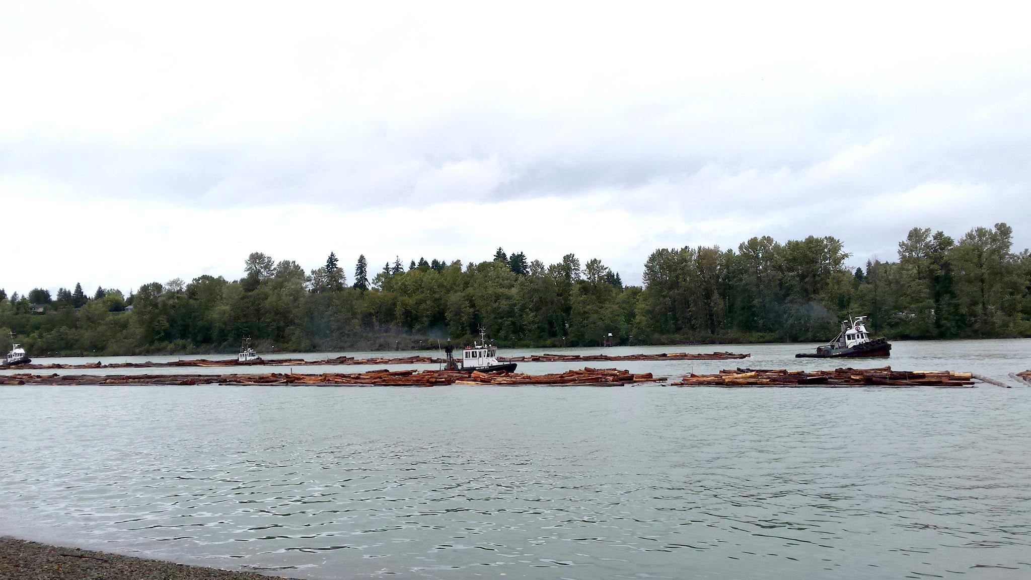 Fraser River log boom (Photo: Robbin Whachell)