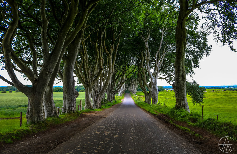 NorthernIreland_DarkHedges_GameOfThrones_FACEBOOK.jpg